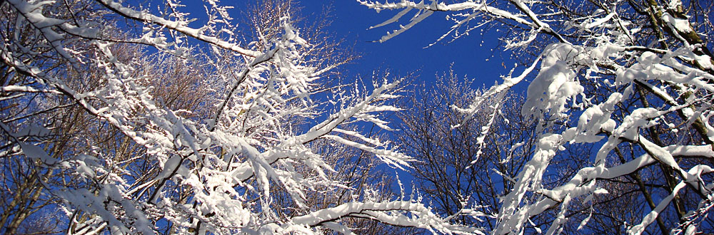 zweige-winter-rieder.jpg
