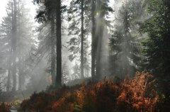 Nebelwald-am-Arber.jpg